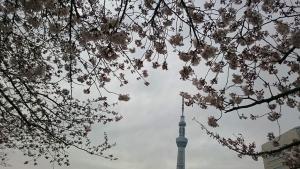 スカイツリーと桜 山縣有斗