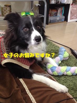 IMG_4005-1.jpg