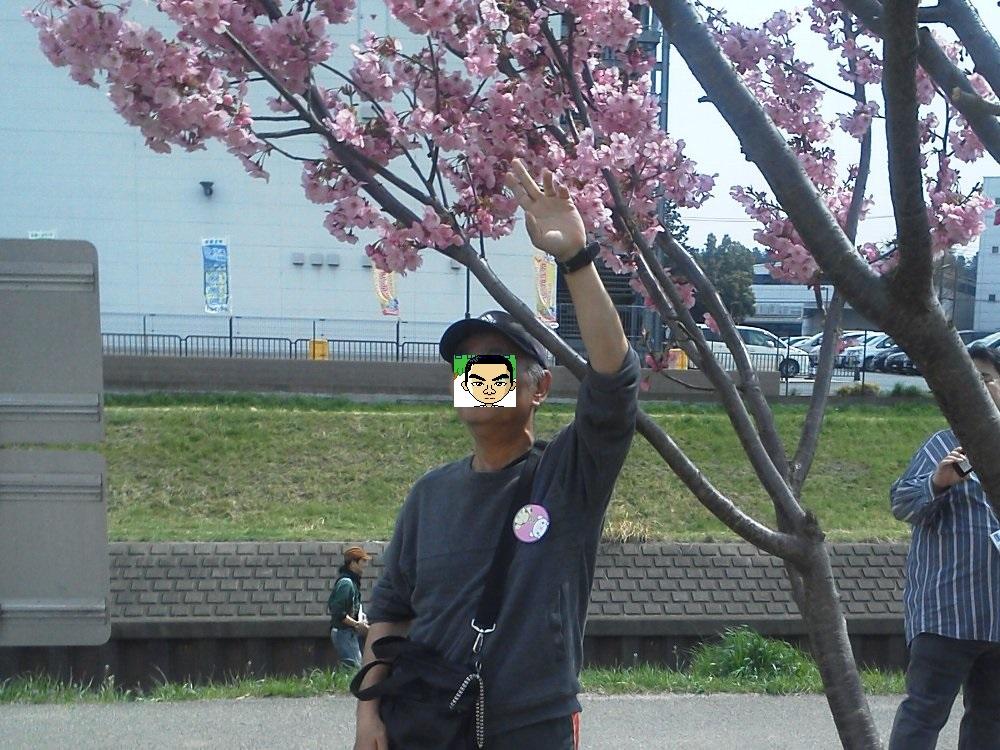 F1000698栄緑道桜祭り黒目川ウォーキング顔隠し