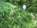 F1000850赤塚植物園シラン