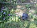 F1000851赤塚植物園サクラソウ