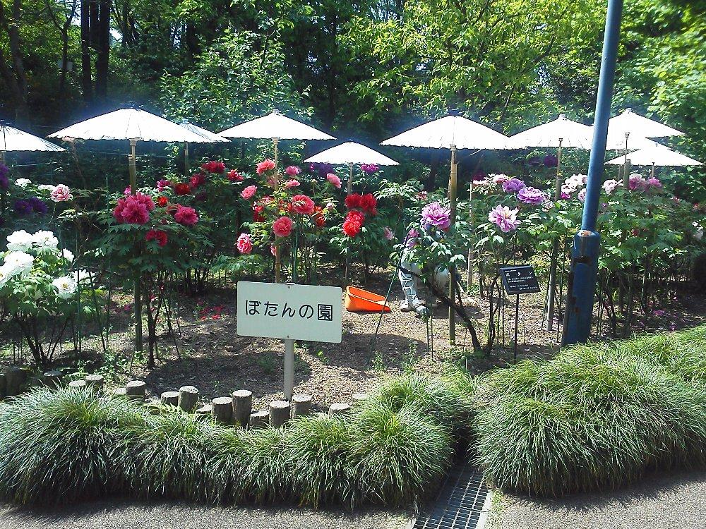 F1000860赤塚植物園