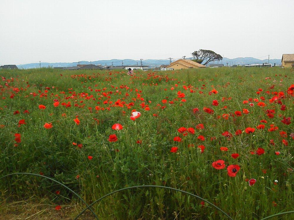 F1000956ソレイユの丘