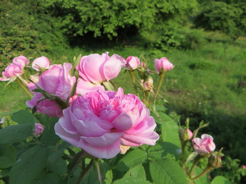 ハーブスタンド 花のつぶやき