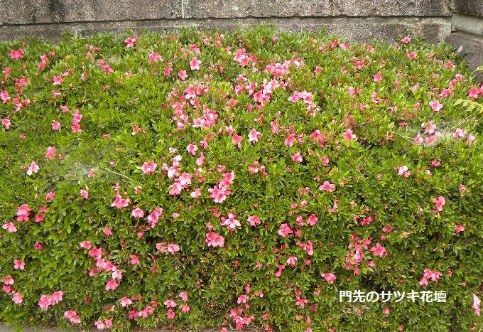 サツキ花壇