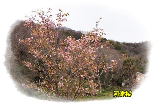 yagioyako12