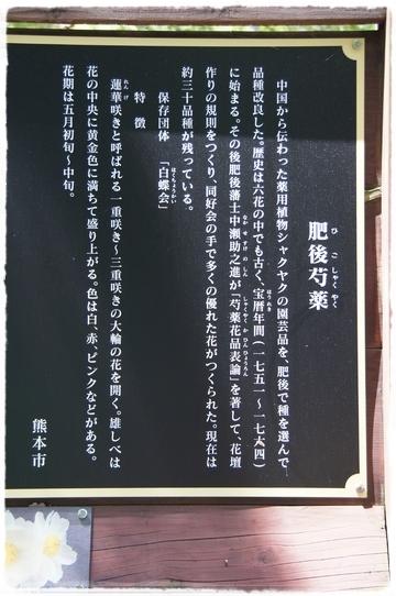 kumamoto10