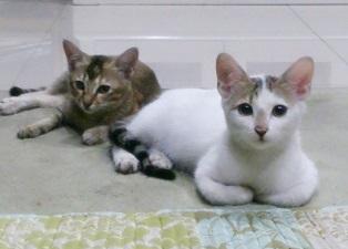 3cats4.jpg