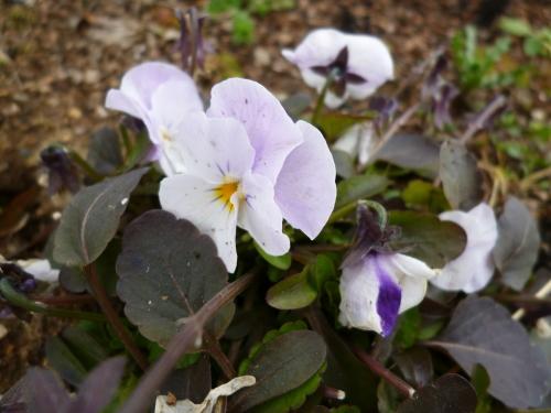 ブログ ロサオリの庭