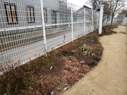 ブログ ロサオリの庭1