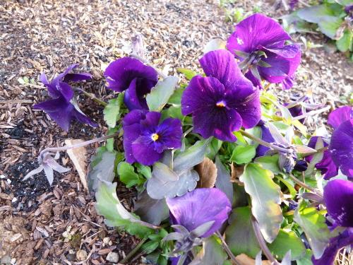 ブログ ロサオリの庭3