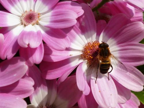 ブログ ハチ