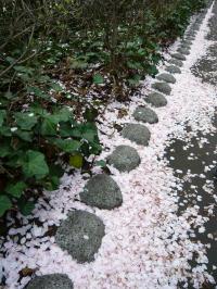 ブログ 桜1