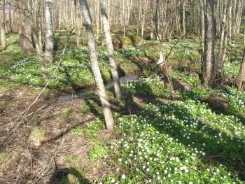 4月半ばの森