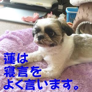IMG_6957-b.jpg