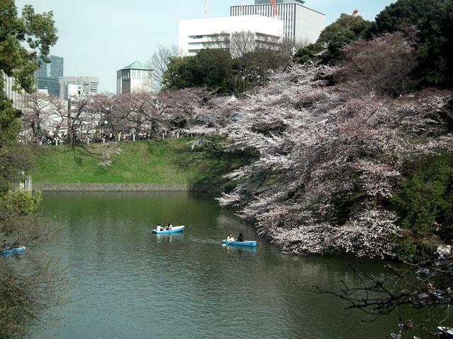 2015千鳥ヶ淵の桜(1)