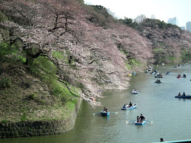 2015千鳥ヶ淵の桜(2)