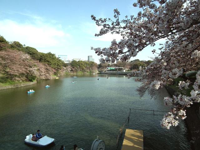 2015千鳥ヶ淵の桜(5)