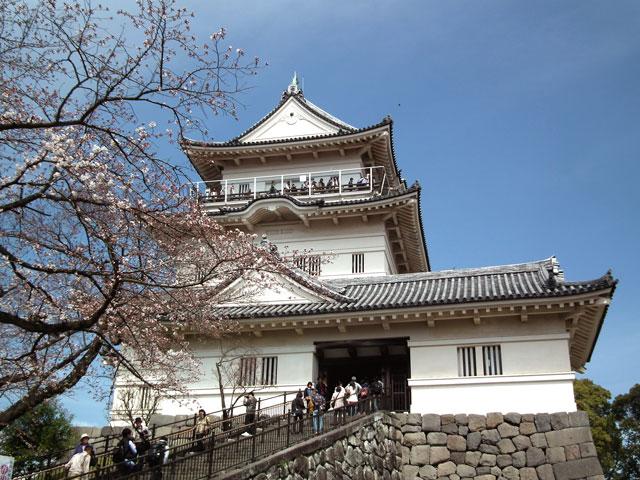 2015小田原城の桜1