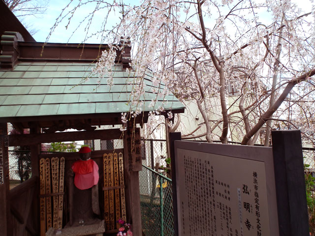 2015大岡川プロムナードの桜(2)