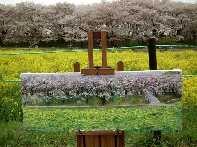 2015権現堂桜堤の菜の花(10)