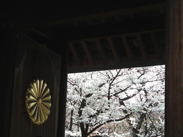 2015靖国神社の桜(1)