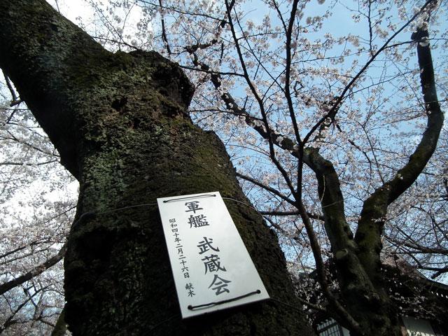 2015靖国神社の桜(2)