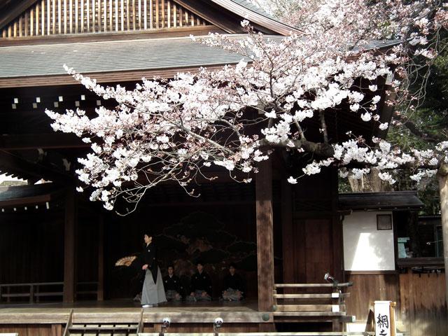 2015靖国神社の桜(3)