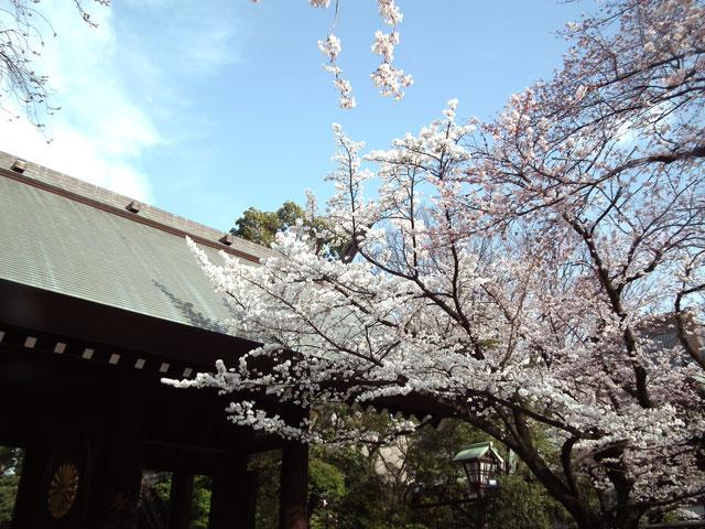 2015靖国神社の桜(4)