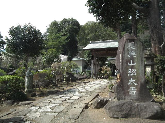 長興山紹太寺の枝垂れ桜5