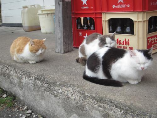 銀婚湯の猫3匹