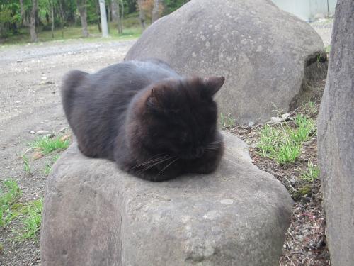 銀婚湯の黒猫