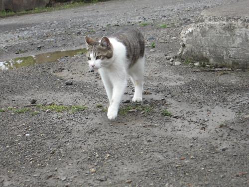 銀婚湯の美猫