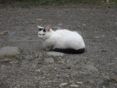 銀婚湯の猫白黒