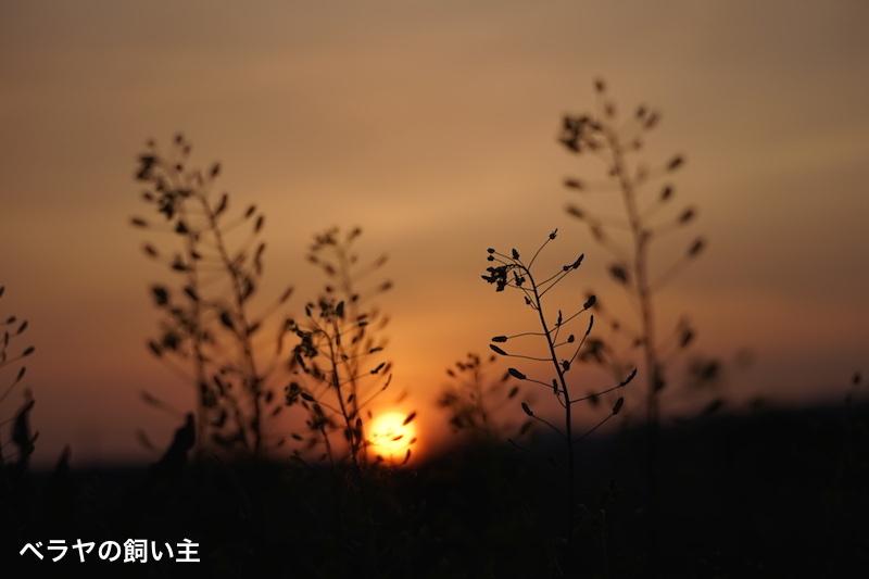 BNK_sunset_DSC01720.jpg
