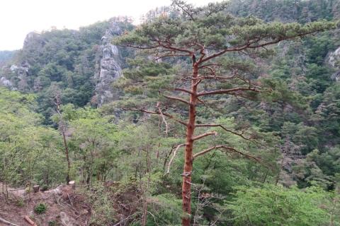 56昇仙峡