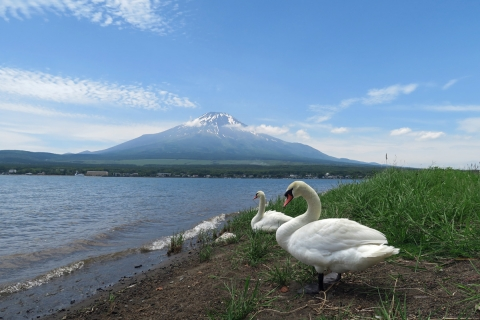 07山中湖白鳥