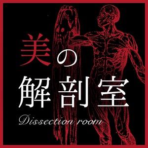 美の解剖室