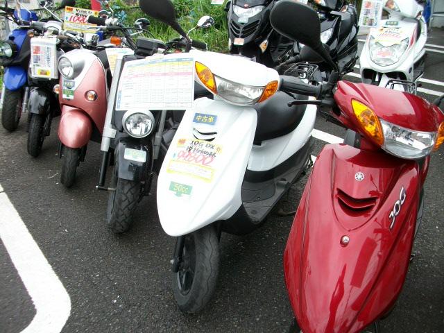 IMGP1100.jpg