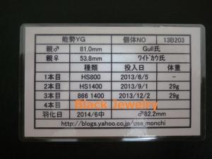 YG822証明BJ_style①