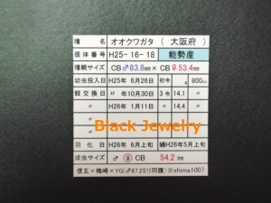 Black Jewelry shimaNS542証明BJ_Style①