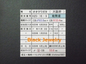 Black Jewelry shimaNS538証明BJ_Style①