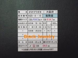 Black Jewelry shimaYG540証明BJ_Style①