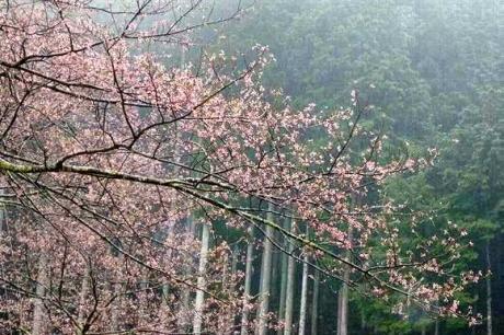 2015-4-4開花
