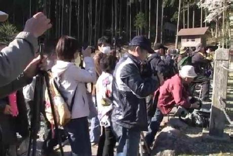 根尾谷淡墨桜を撮影する人たち