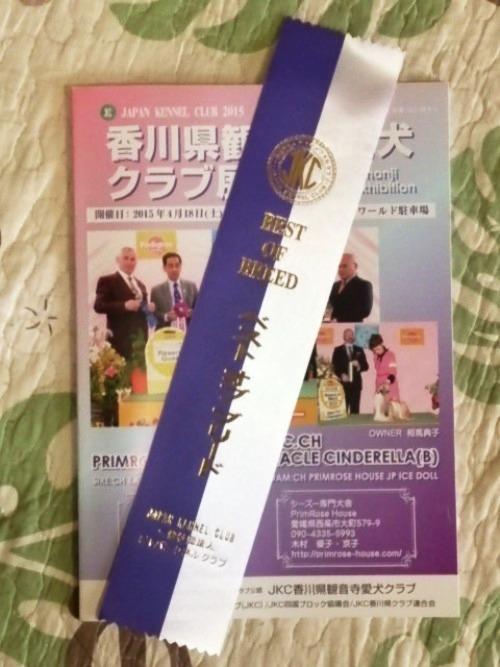 パピー最終戦 (7)