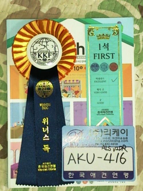 韓国遠征記 (16)