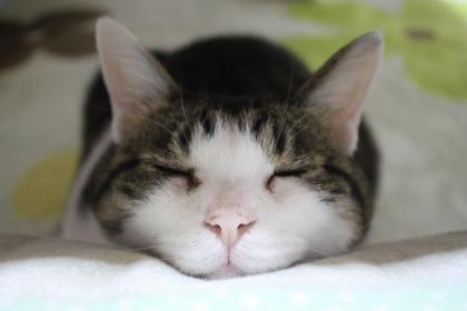 眠いのです