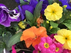 flower201504_1mini.jpg
