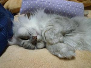 メイ 熟睡